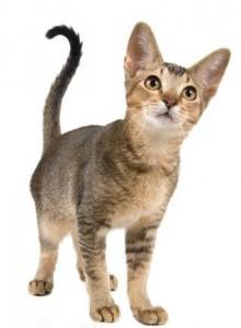 Kitten Service